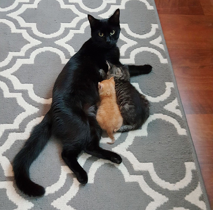 Котенок позднее утверждал, что в тот момент просто работал под прикрытием. Но полицейский все же решил его приютить доброта спасет мир, котята, спасение животного