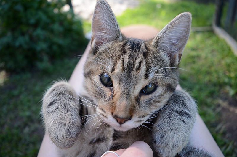 Австралийские врачи спасли зрение котятам, родившимся без век жвотные, котята, лечение, помощь, счастливый конец