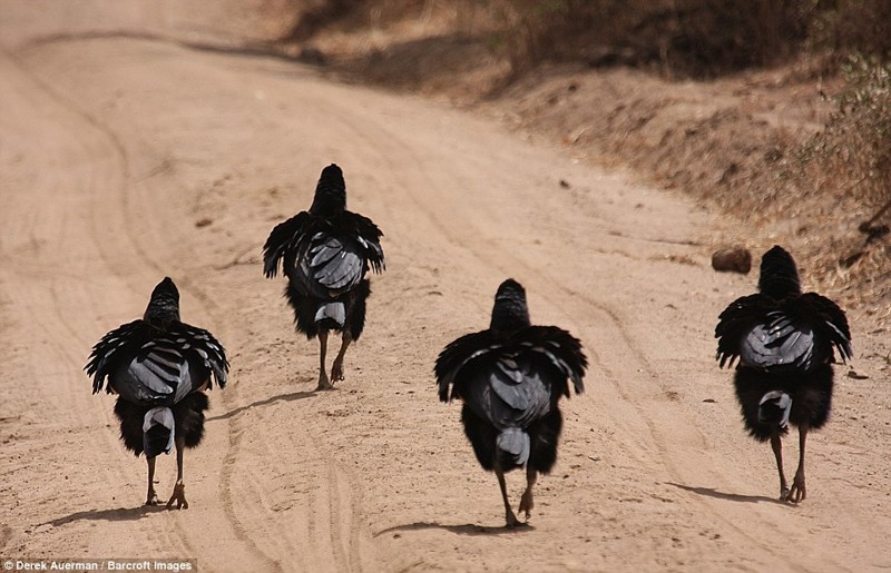 Как на параде животные, конкурс, позитив, прикол