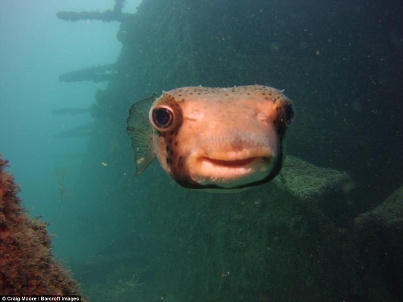 Счастливая рыба.  животные, конкурс, позитив, прикол