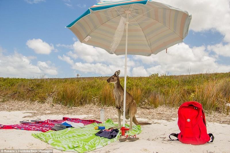 Турист на пляже животные, конкурс, позитив, прикол