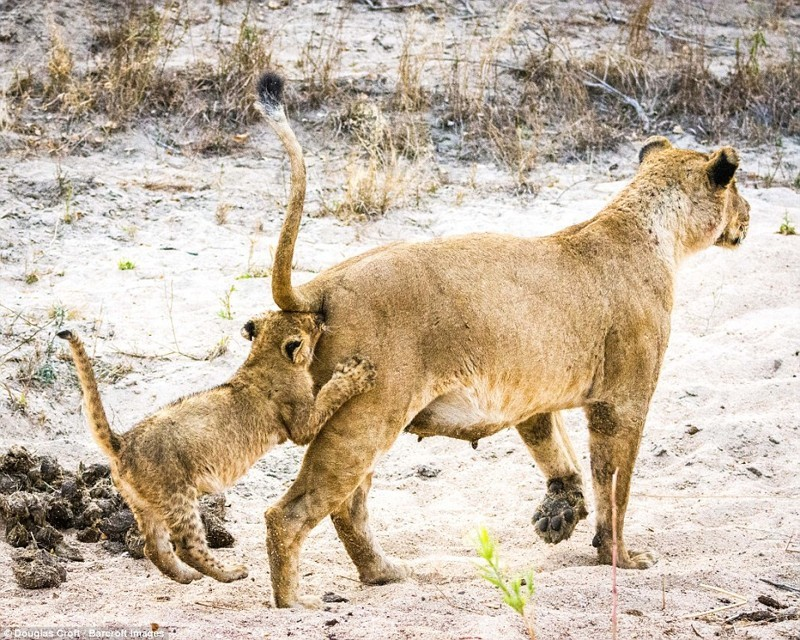 Лучшие работы конкурса смешных фотографий дикой природы животные, конкурс, позитив, прикол