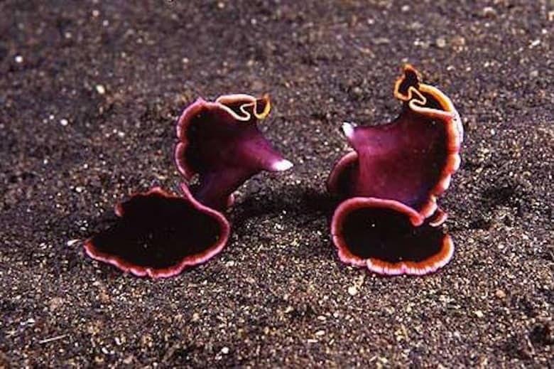 5. Плоские черви животные, спаривание, удивительное рядом