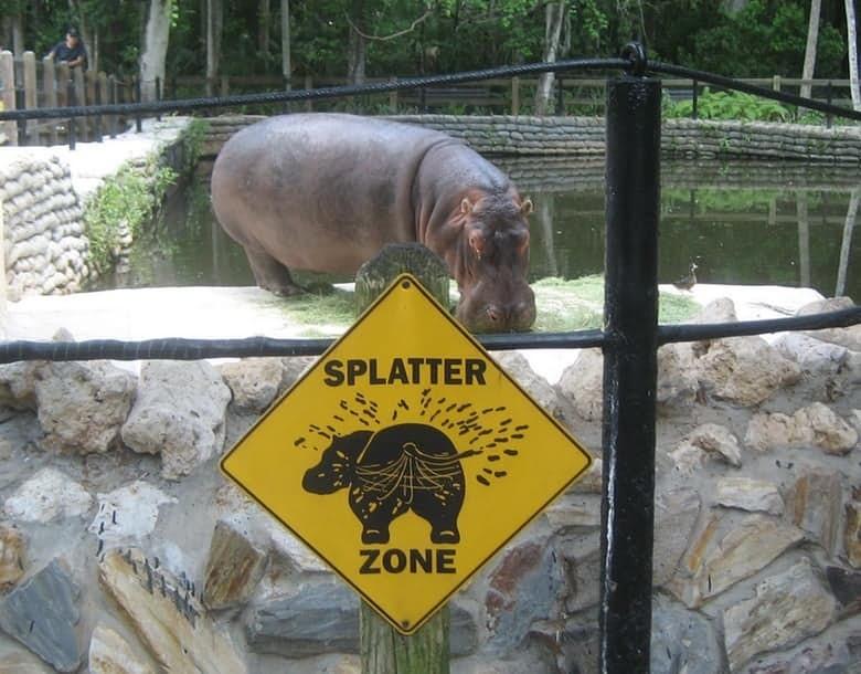 10. Бегемоты животные, спаривание, удивительное рядом