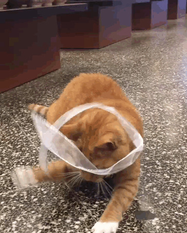 животные, кот, магазин, работа