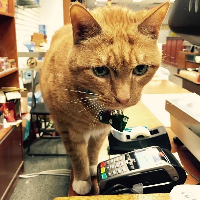 Все отзываются о нем, как об очень дружелюбном и милом коте  животные, кот, магазин, работа