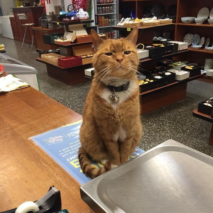 """Все называют Бобо """"Королем магазина"""" животные, кот, магазин, работа"""