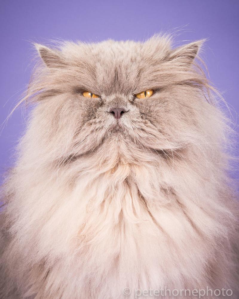 Каникулы, картинки смешные кошки толстые
