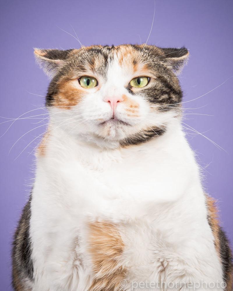 Коты прикольные картинки толстые, картинки лето