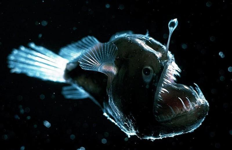 3. Морской черт странные создания, творения природы, удивительное рядом