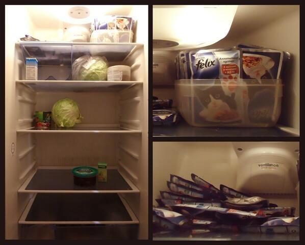 Холодильник холостяка и его кота видео, животные, кто главный, прикол, хозяин