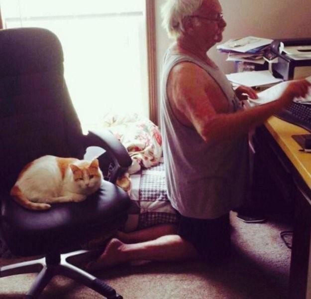 Кот выгнал из-за компа. Пес занял кровать. Чет я уже не уверен, что я хозяин в доме... видео, животные, кто главный, прикол, хозяин