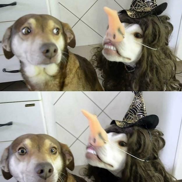 34 самых смешных собачьих фото, известных человечеству животные, мемы, собаки, юмор