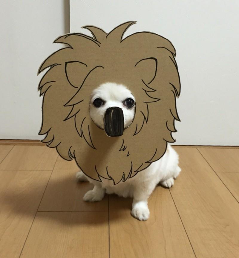 Семба сказала, что изначально она делала для него костюмы исключительно из одного картона  животные, картон, прикол, собака