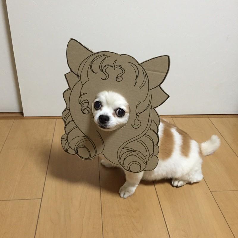 Вскоре Семба дошла до создания довольно сложных картонных конструкций    животные, картон, прикол, собака