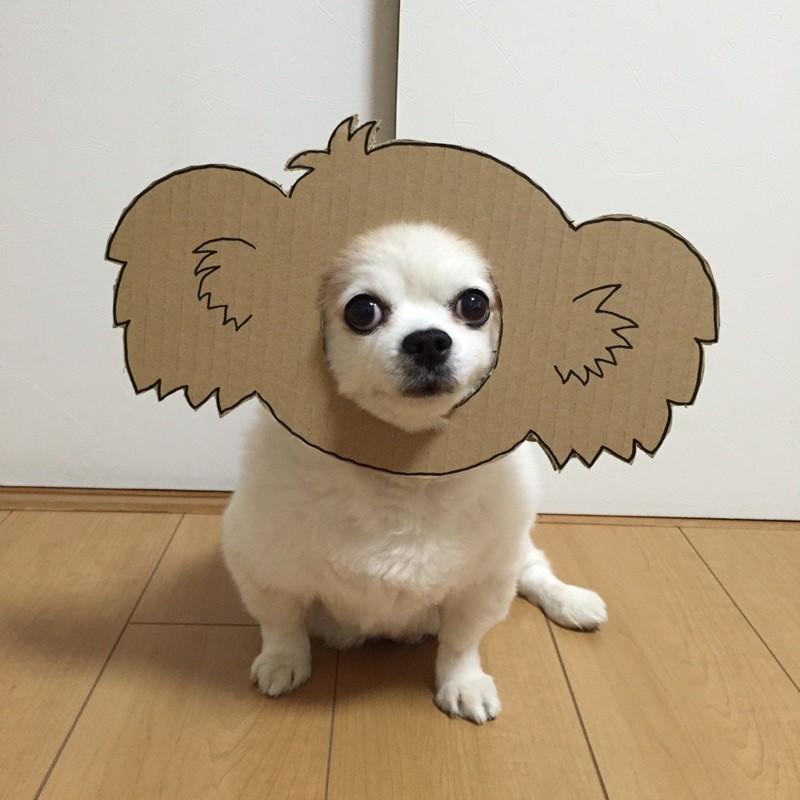 Девушка делает уморительные костюмы из картона для своей собаки животные, картон, прикол, собака