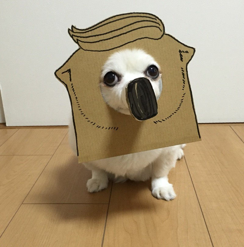 Знакомьтесь, чихуахуа Маметаро   животные, картон, прикол, собака