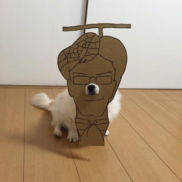 Его хозяйка Семба делает для него смешные костюмы из картона   животные, картон, прикол, собака