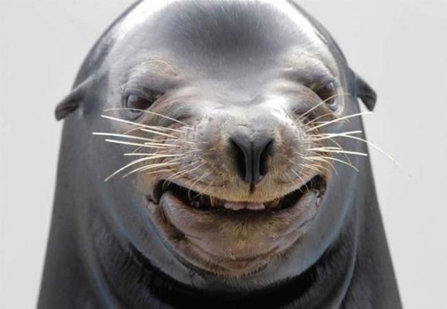 Животные, которые небыли готовы кфотосессии животные, позитив, фото, юмор