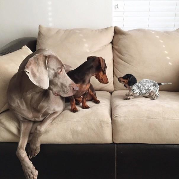Две собаки приняли в семью третьего щенка и стали лучшими друзьями животные, лучшие;друзья, факты
