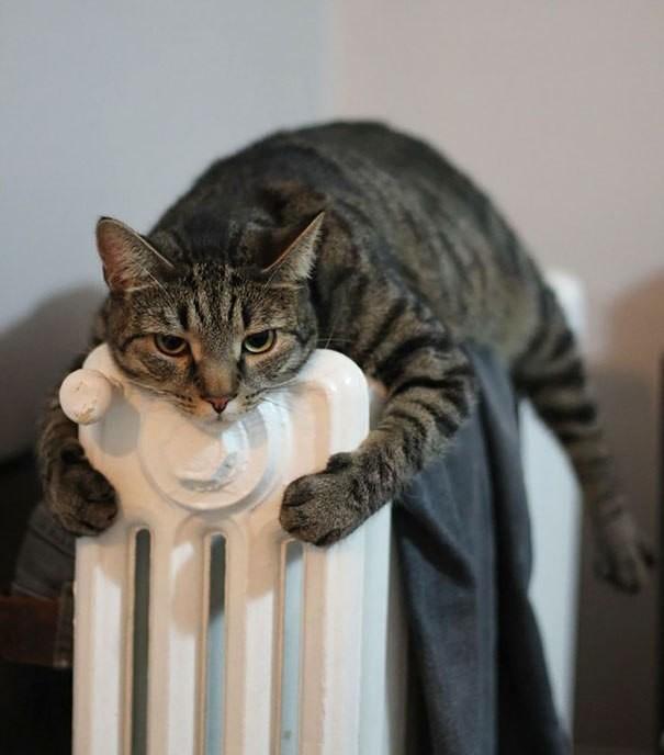 Котейки, которые больше всего на свете любят тепло животные, коты, факты