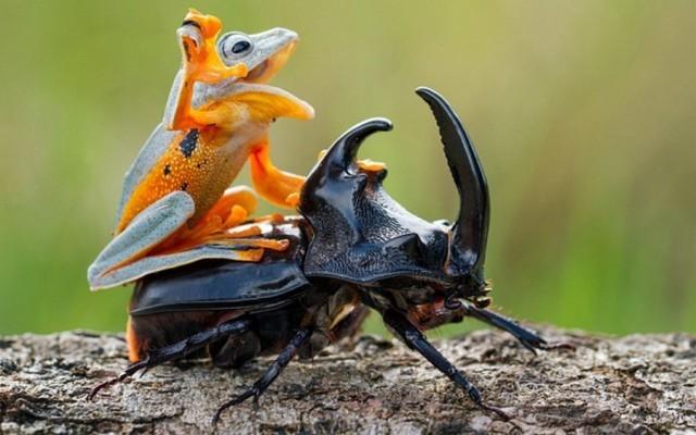 Когда наглость просто зашкаливает: зверюги-автостопщики животные, прикол