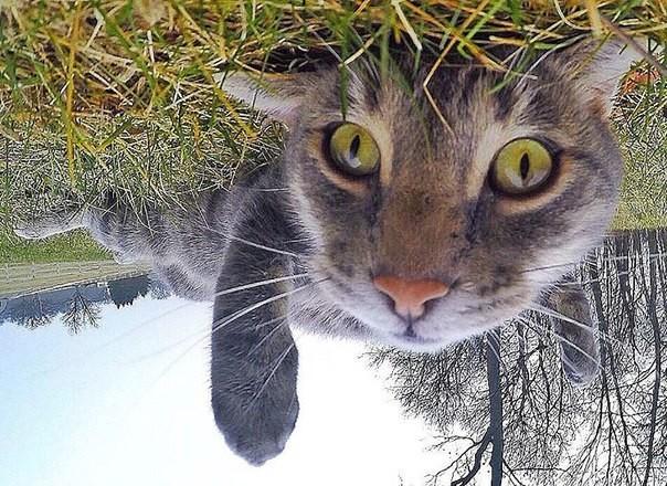 Поразительные фотографии, которые делает селфи-кот животные, селфи-кот, юмор