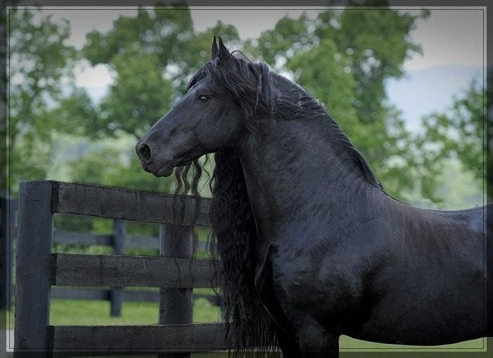 Самый красивый конь Фридрих Великий животные, факты