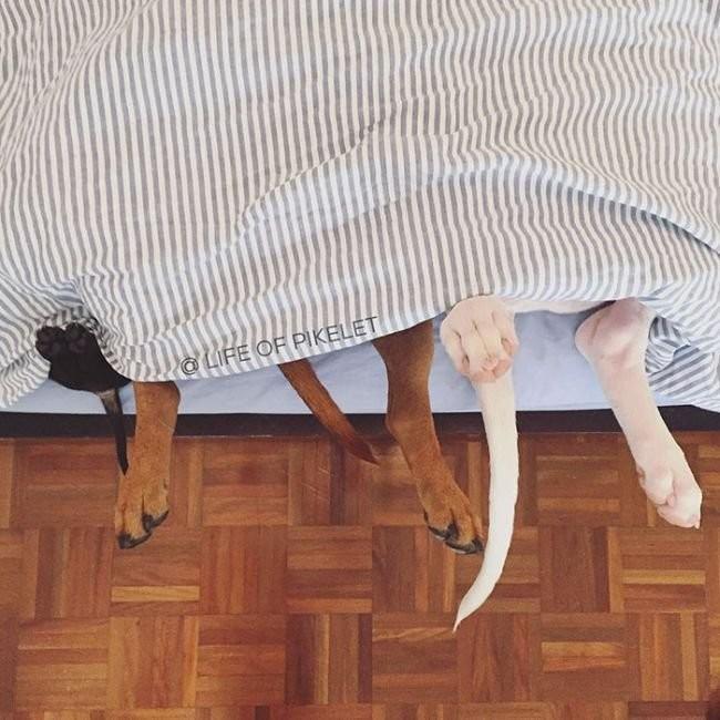 Взрослые собаки взяли опеку над спасённым щенком! животные, история, милота