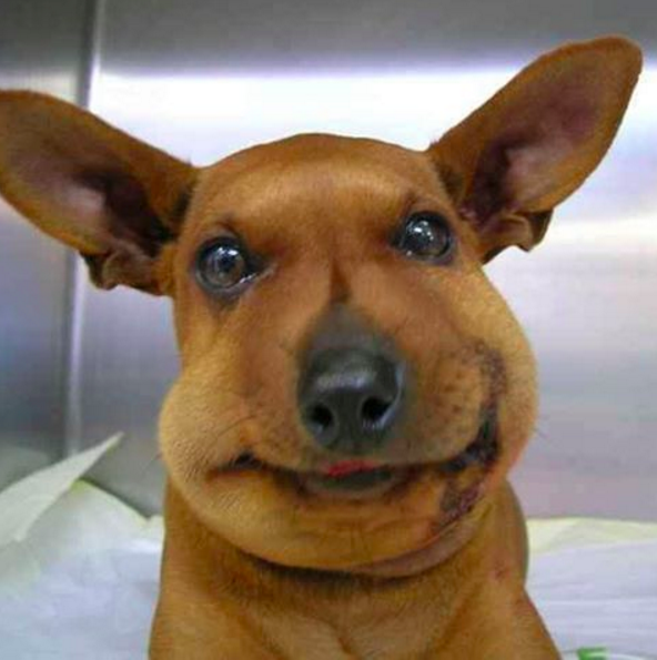 Я пока еще не смотрелся в зеркало... питомцы, собаки, фотография, юмор