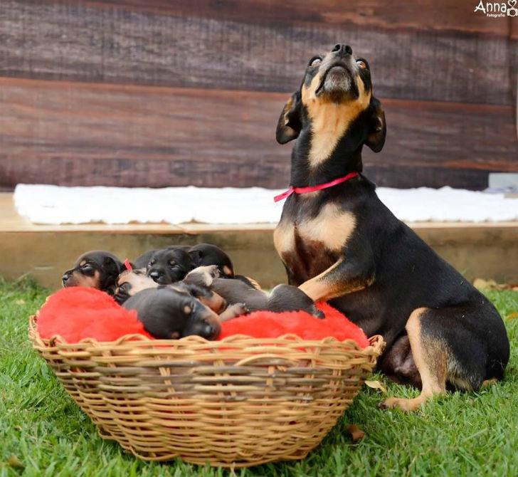 Да это просто самая фотогеничная собака-мама на свете животные, мама, собака