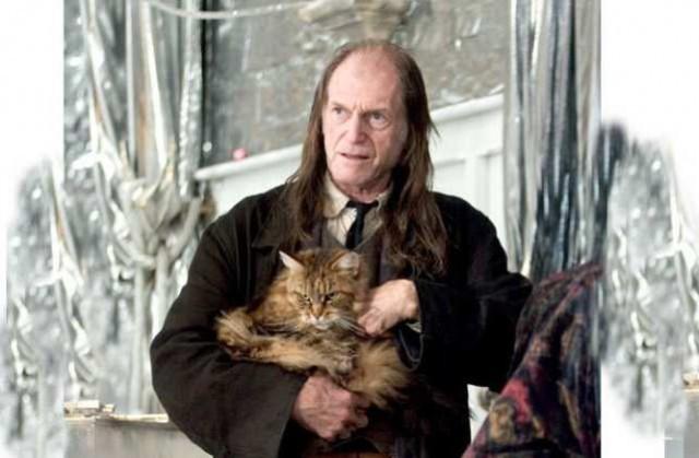 5. Мейн-кун снялся в фильмах о Гарри Поттере животные, коты, факты