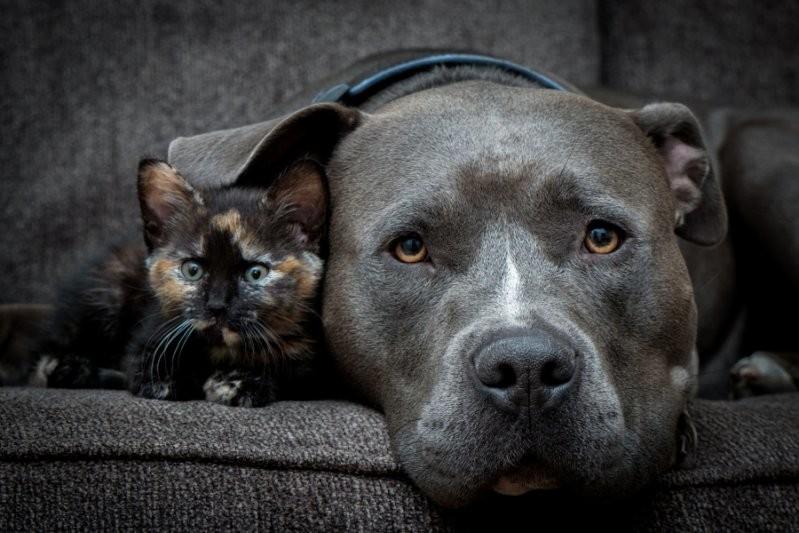 Любовь лучшего друга животные, милота