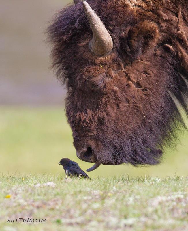Птичка и зверь животные, милота