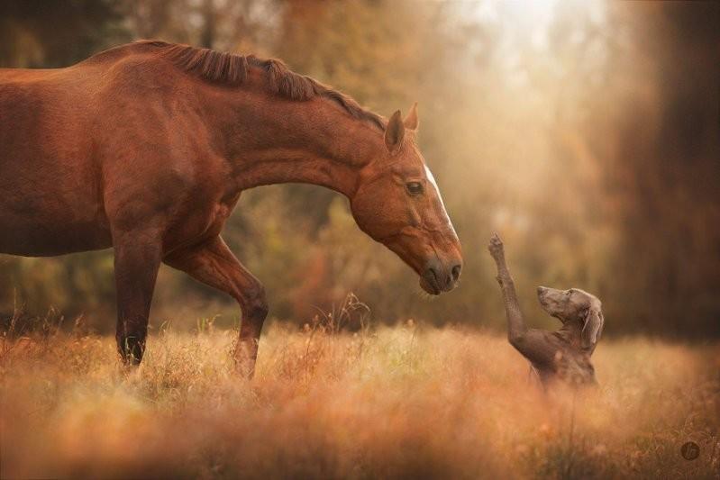 Привет, друг животные, милота