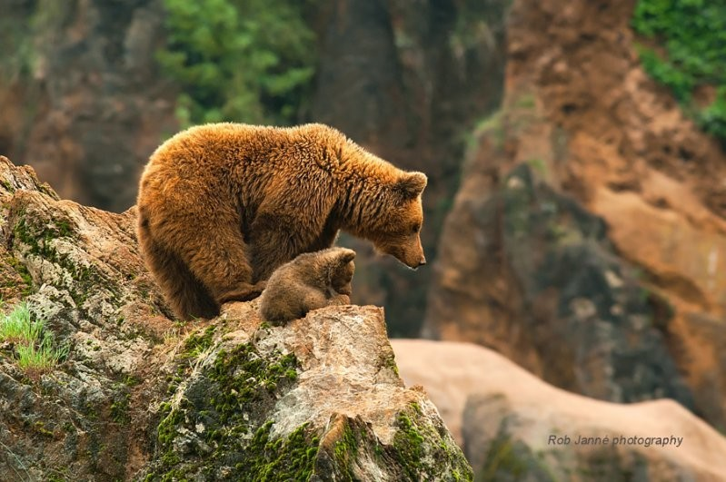 Сверху животные, милота