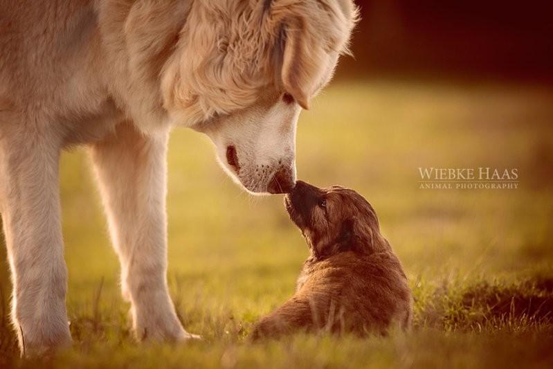Старший брат животные, милота