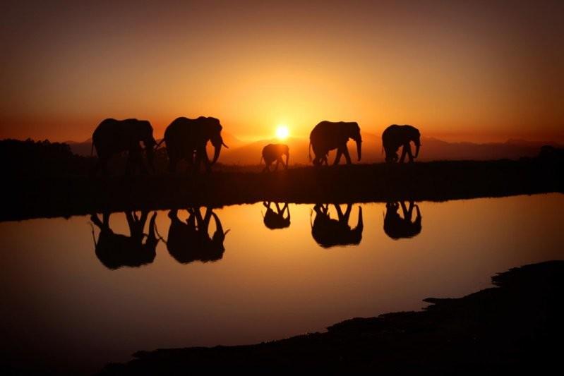 Слоны на восходе солнца животные, милота