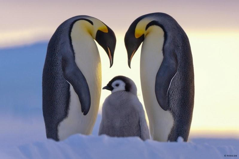 Родительская любовь животные, милота