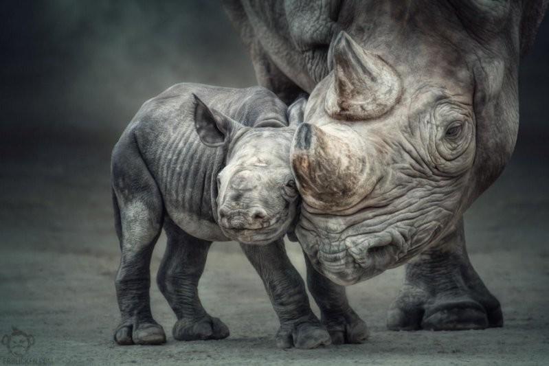 Узы матери и ребёнка животные, милота