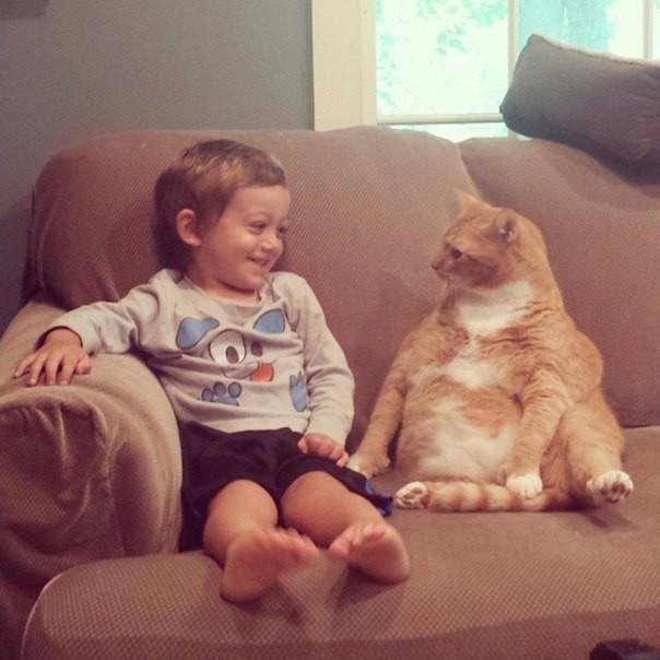 Нежеланный кот стал опекуном этого маленького мальчика, следуя за ним повсюду животные, коты, факты
