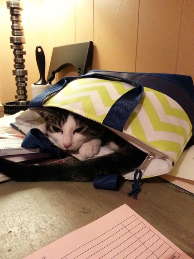 Как тебе эта сумка? животные, коты, пакет