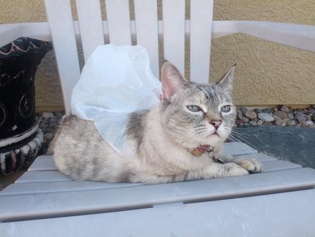 Вот он – супер-герой! – гроза соседских котов. животные, коты, пакет