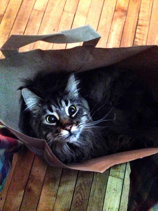 «Да что же это такое?! Не дают котику поспать!» животные, коты, пакет