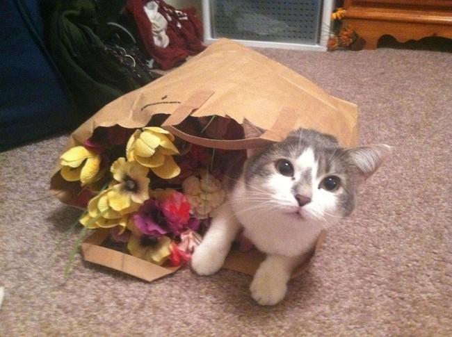Не знаю, как цветы, но пакетик классный. животные, коты, пакет