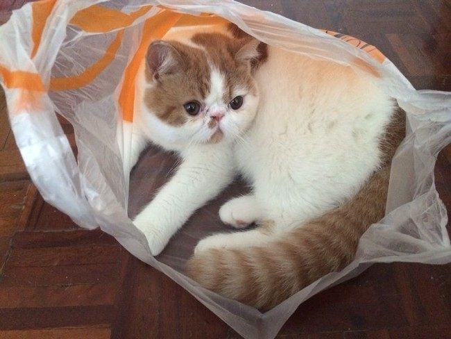 «Кто шуршит пакетом?! Понятия не имею.» животные, коты, пакет