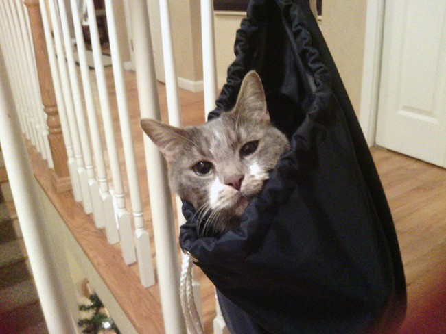 «Ну-ка, покатай меня.» животные, коты, пакет