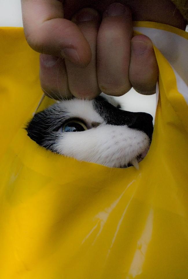 Опция «против воров»: активировано. животные, коты, пакет