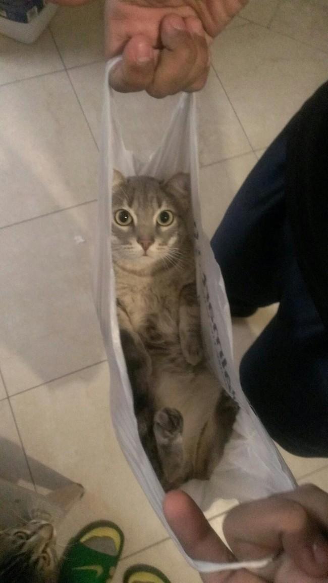 Похоже, кто-то мягкий и пушистый оказался в левом углу моего пакета. животные, коты, пакет