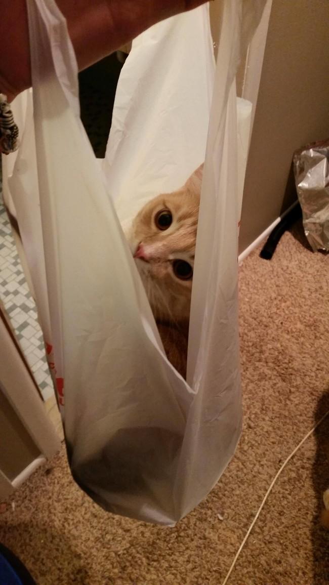 «Давай еще раз сходим в магазин, а потом вернемся домой!» животные, коты, пакет